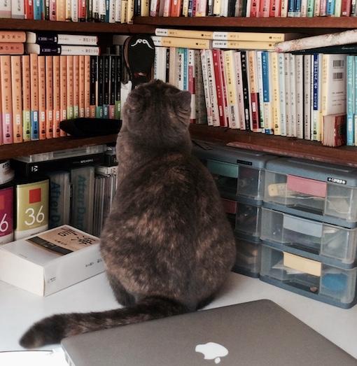 MacBookPro2916.jpg
