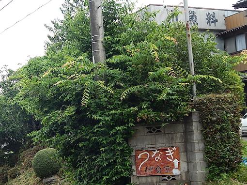 fujimidai-3.jpg