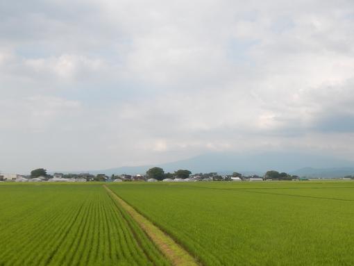 inaho-7.jpg