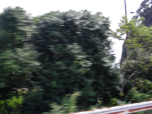 kajigahana10.jpg