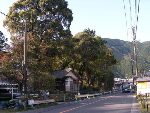 kamisunohana04.jpg