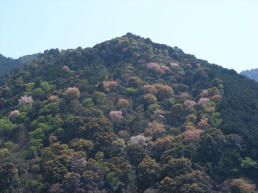 kamisunohana12.jpg