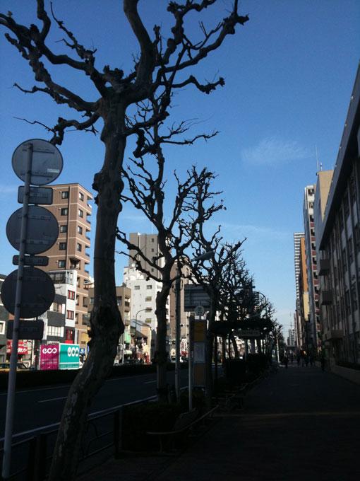 kiyosumidori01.jpg