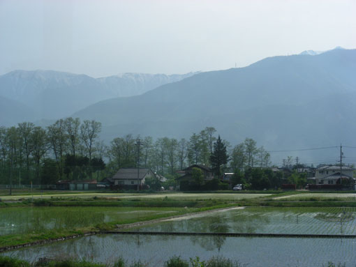 shishigahana14.jpg