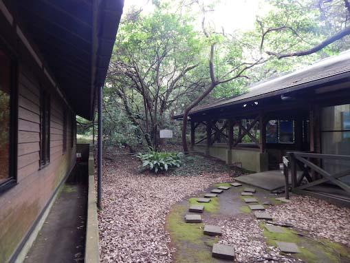 tsurunemisaki-1.jpg